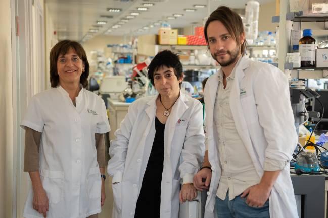investigadores CIBERDEM-IDIBAPS