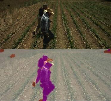 Detección de obstáculos en vídeos de campos de maíz. / RHEA.