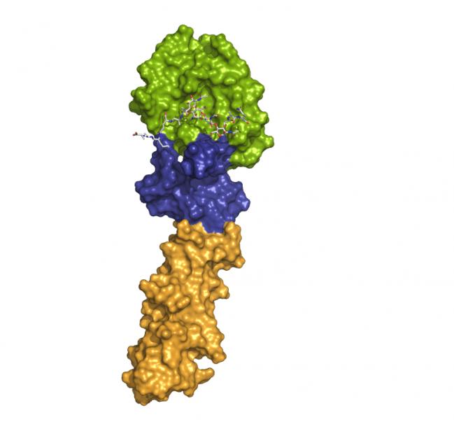 Estructura tridimesional de la proteína CbpF