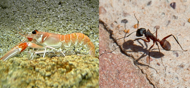 A partir del exoesqueleto de crustáceos e insectos es posible obtener biofertilizantes.