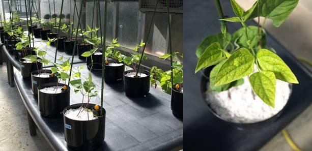 Nuevos fertilizantes de micronutrientes más eficaces y sostenibles