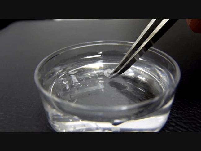 Los nuevos materiales pueden tener importantes aplicaciones en el campo de la ingeniería de tejidos