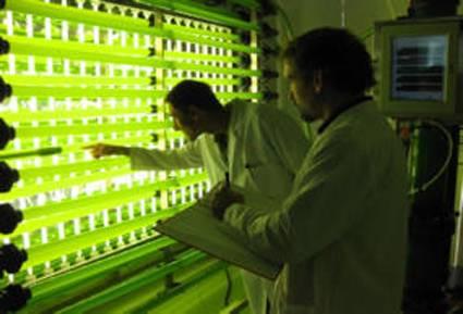 Técnicos del proyecto trabajando con un fotobiorreactor. Imagen: ainia.