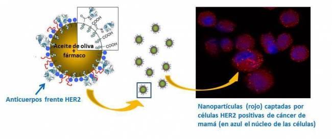 Estructura de las nanocápsulas / Fundación Descubre