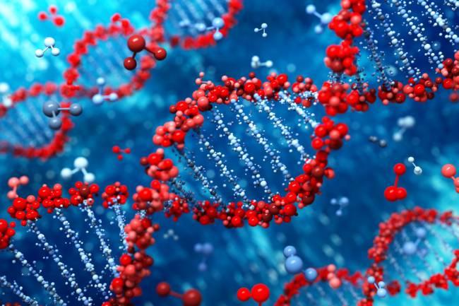 El estudio de especies cercanas permitirá entender mejor los procesos de formación de nuevos genes codificantes. / Fotolia