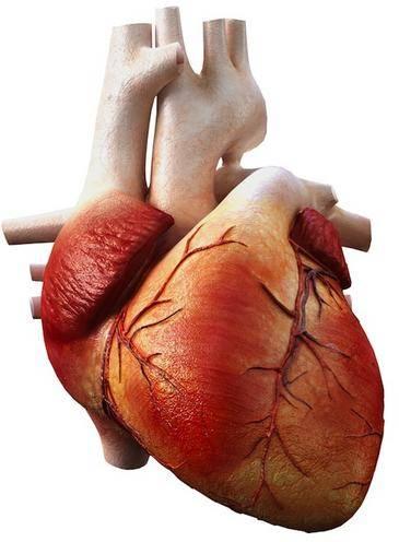 Investigadores del Grupo Biología Molecular y Fisiopatologías Cardiacas de la Universidad de Jaén (UJA) / Fundación Descubre