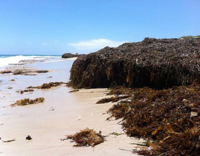 estos hábitats, formados por macroalgas, praderas submarinas, manglares y marismas, se encuentran entre los más valiosos de la Tierra,