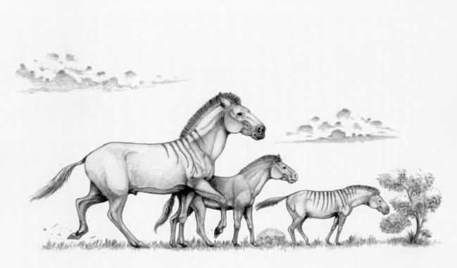 Recreación de tres formas distintas del caballo enano Hipparion