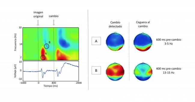 Actividad cerebral de la ceguera al cambio. Imagen: UAM.