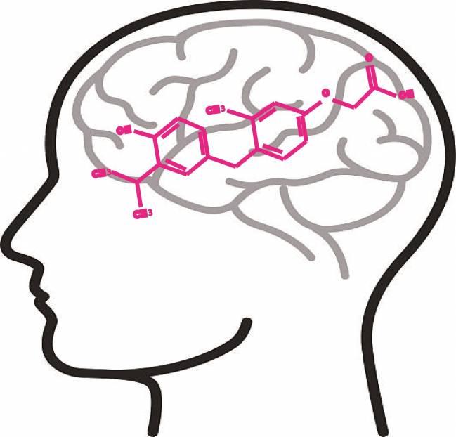 Dibujo diagrama de una cabeza humana, donde se ve el cerebro y el modelo de una molécula