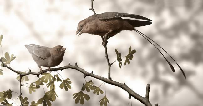Primer caso de identificación de sexo en un ave prehistórica