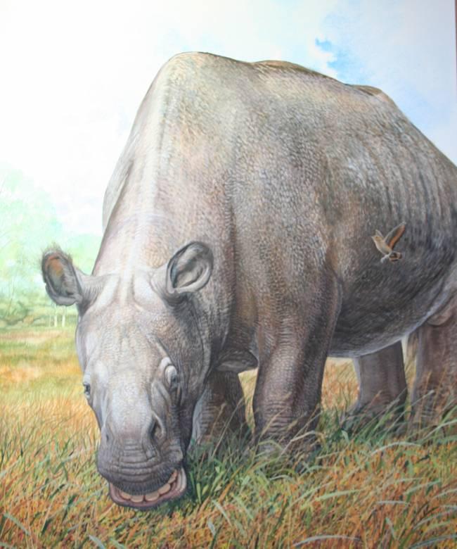 Se sabe muy poco de la historia evolutiva de estos animales a pesar de su reciente extinción, hace 10.000 años