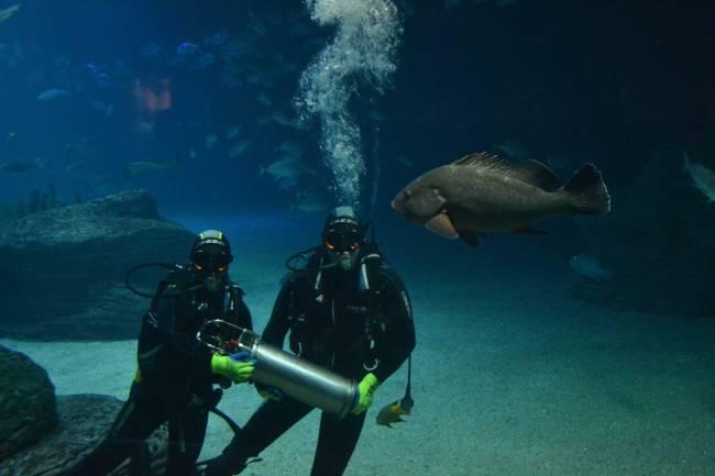 SAMARUC permite detectar, grabar y clasificar los sonidos de diferentes especies marinas