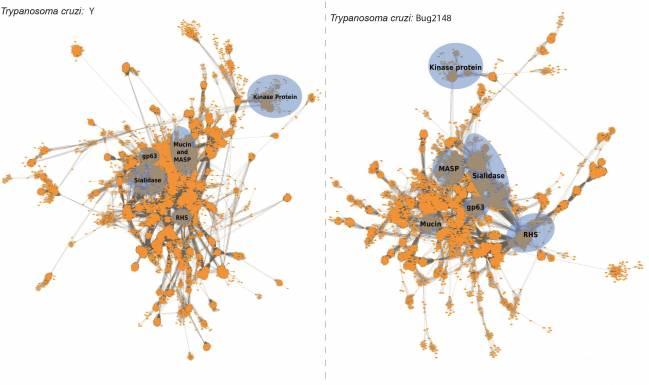 Agrupación diferencial de las familias proteicas de Trypanosoma cruzi