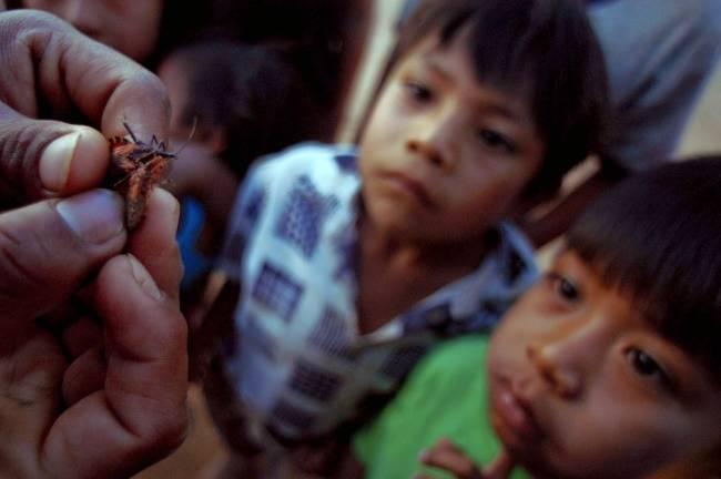Niños bolivianos observan insectos vinchuca, transmisor de la enfermedad de chagas. / Efe