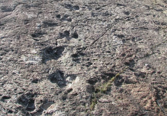 Icnitas en el yacimiento de El Barranco de la Canal (La Rioja)
