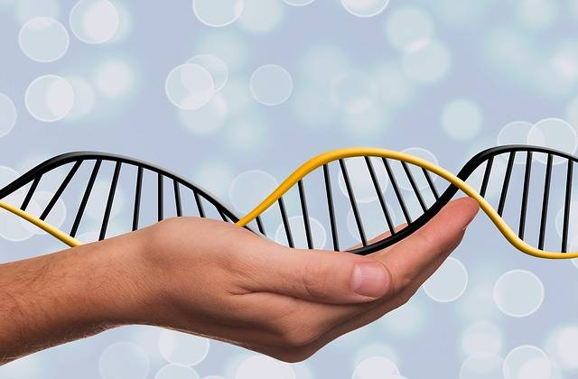 Deoxyribonucleic acid - CC