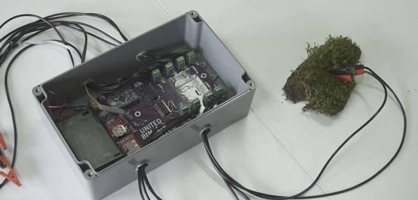 Dispositivo BtM datalogger que permite cuantificar la actividad de musgos y líquenes. /UAM