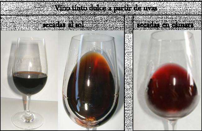 Comparativa de vinos / Fundación Descubre