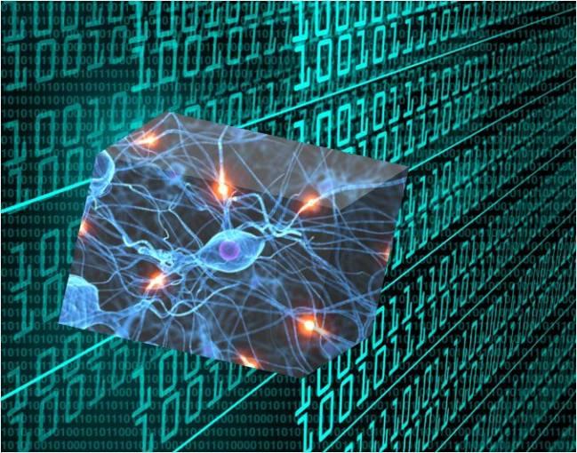 El modelo Intelligent Biomedic Organizations (IBO) facilita el análisis de datos procedentes de expresión genética.