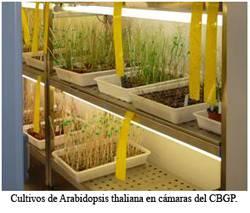 Genes de plantas
