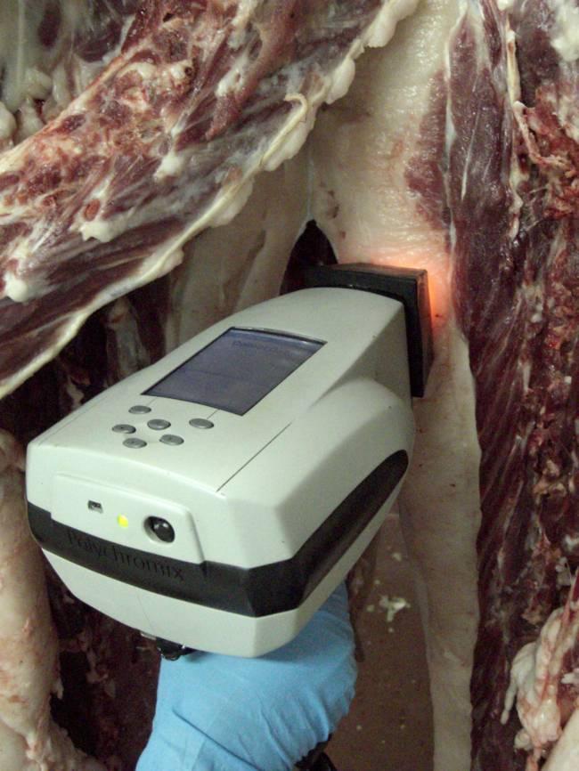 El sensor permite analizar las canales del cerdo ibérico en el propio matadero / Fundación Descubre