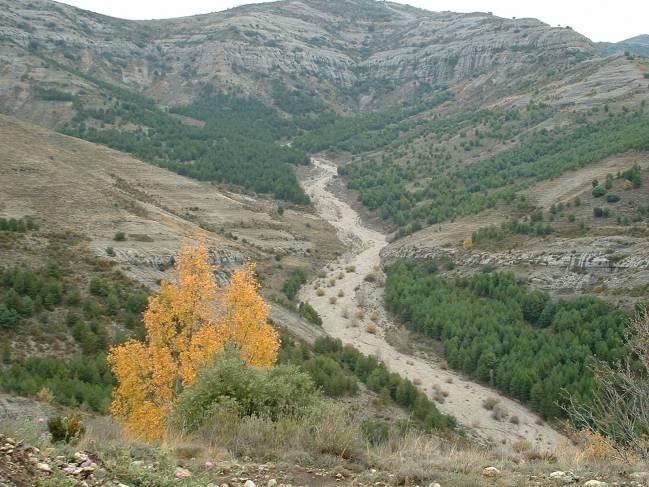 Conectividad propiciada por la continuidad y proximidad espacial de las masas forestales en el entorno del Barranco de Caranys (Tremp, Lérida).