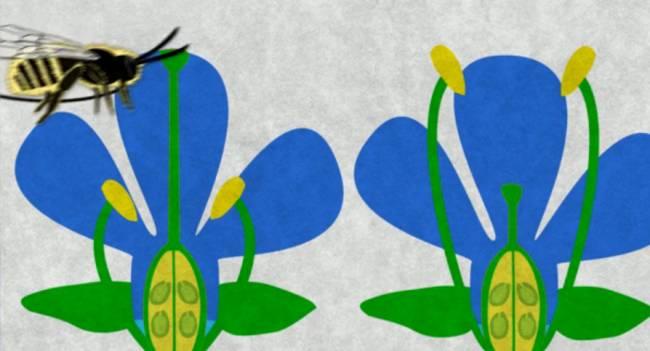 Captura del vídeo de flores y abejas