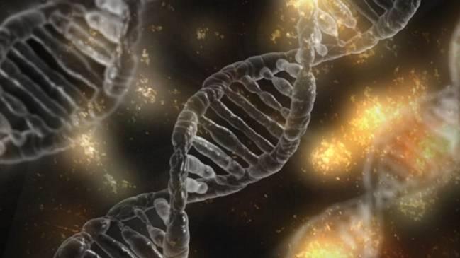 La desaparición de bases en el ADN puede ser espontánea o producida por proteínas reparadoras