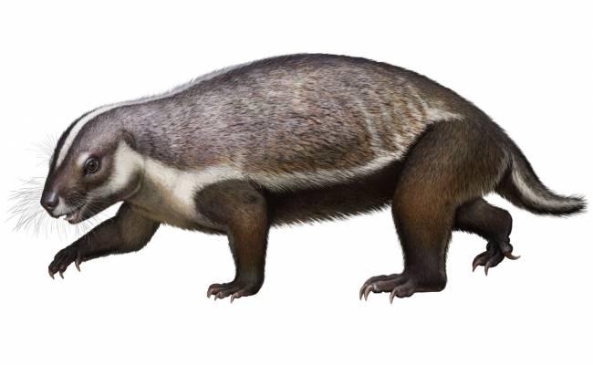 Mamífero de Madagascar