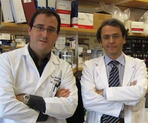 Dr. Augusto Villanueva y Dr. Josep Mª Llovet
