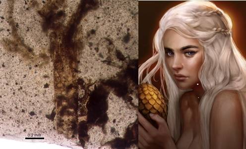 Una nueva especie cuidadora de la prole, la Daenerytanais maieuticus, debe su nombre al personaje de ficción Daenerys Targaryen, 'Madre de Dragones', la Khaleesi de la serie Juego de Tronos.