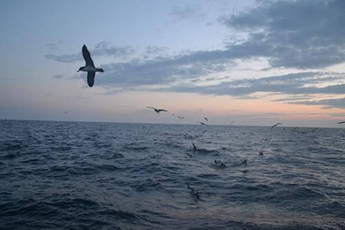 Ave sobrevolando el mar