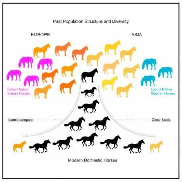 Infografía de la historia genética de los caballos