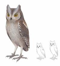 Ilustración del aspecto del autillo común europeo (izquierda) y de la especie extinta Otus mauli de Madeira. Imagen: Pau Oliver