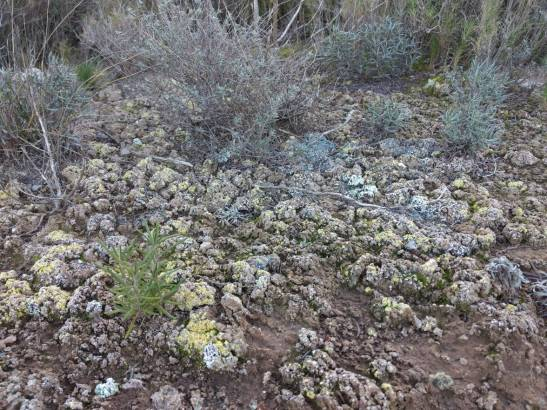 Las-biocostras-del-suelo-amortiguan-los-
