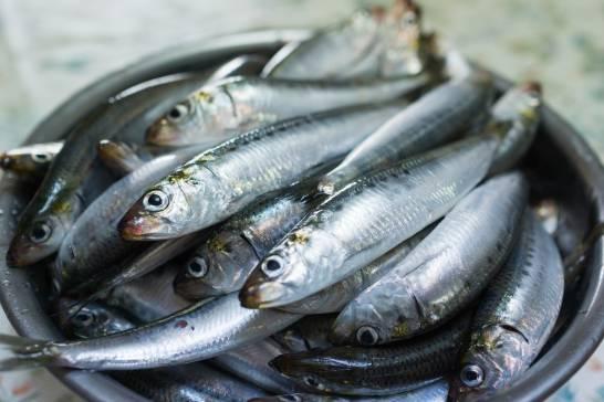 Mas-de-la-mitad-de-las-sardinas-y-anchoa
