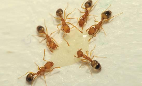 Un-algoritmo-inspirado-en-los-caminos-descartados-por-las-hormigas