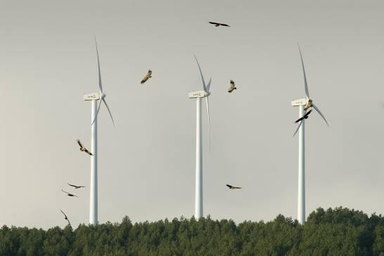 Las-energias-renovables-amenazan-a-la-biodiversidad-en-espana