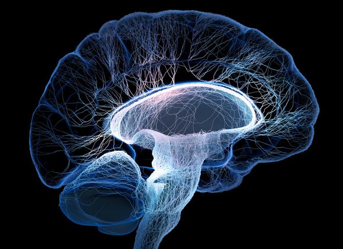 Infografía del cerebro. / Fotolia