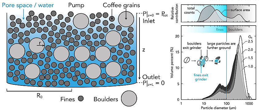 Esquema de los granos de cafe